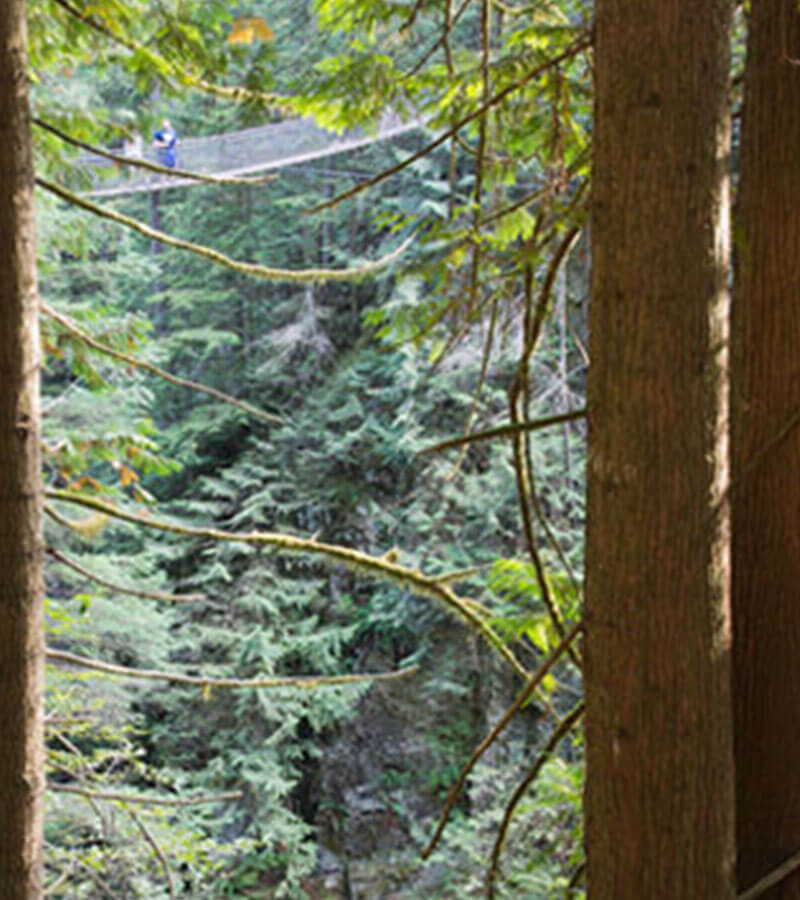 Two people overlooking the tall trees from the Capilano Suspension Bridge in North Vancouver