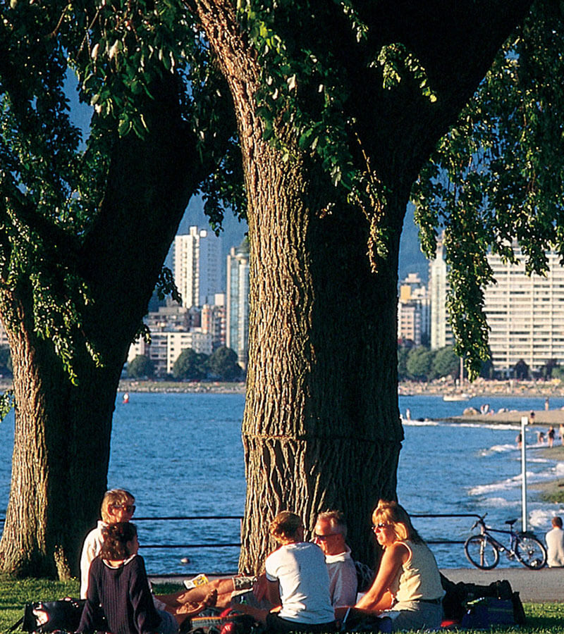 People sitting under a tree by the seashore and enjoying a sunny day